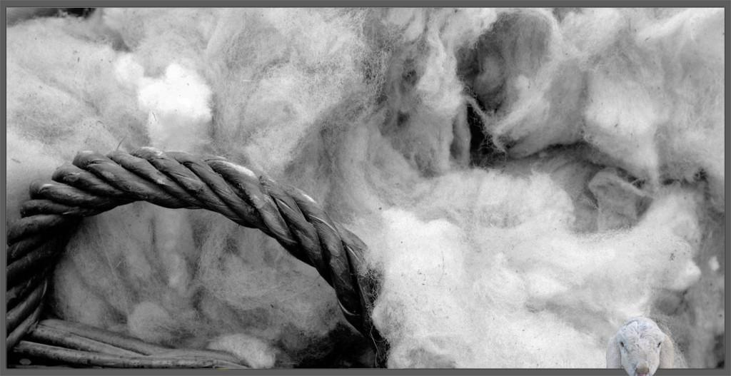 lana di pecora