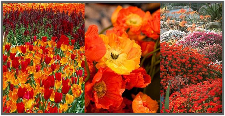 il-giardino-stile-e-colori-1