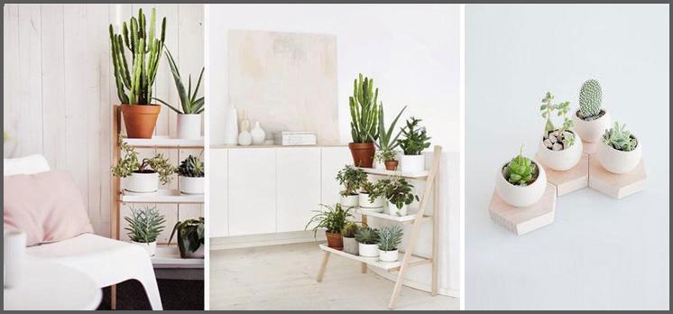piante_2