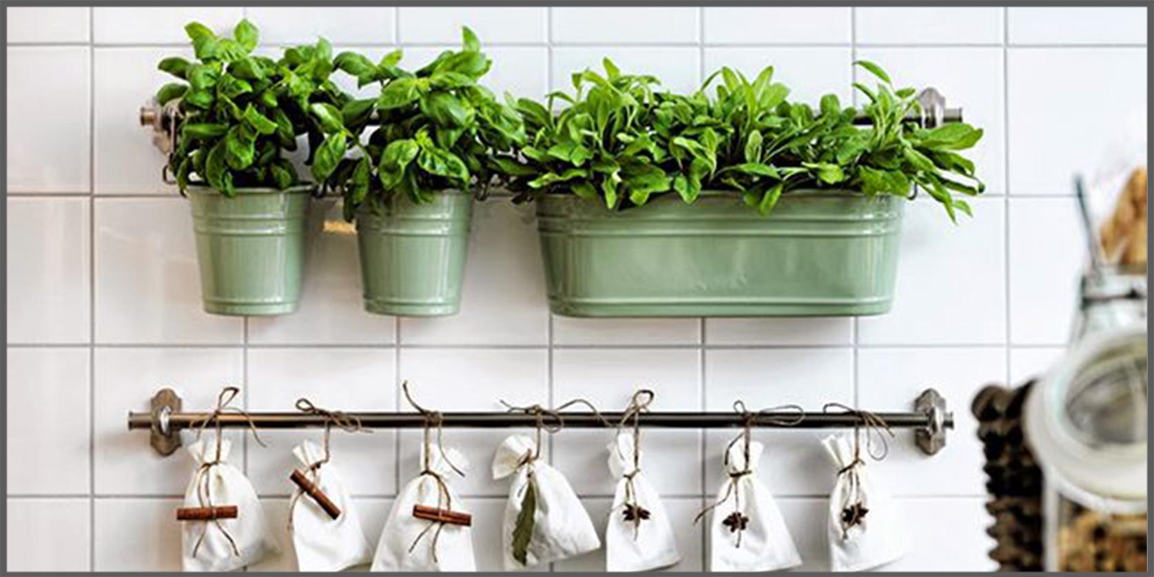 avere a portata di mano delle erbe aromatiche ci agevola la preparazione dei nostri piatti preferiti