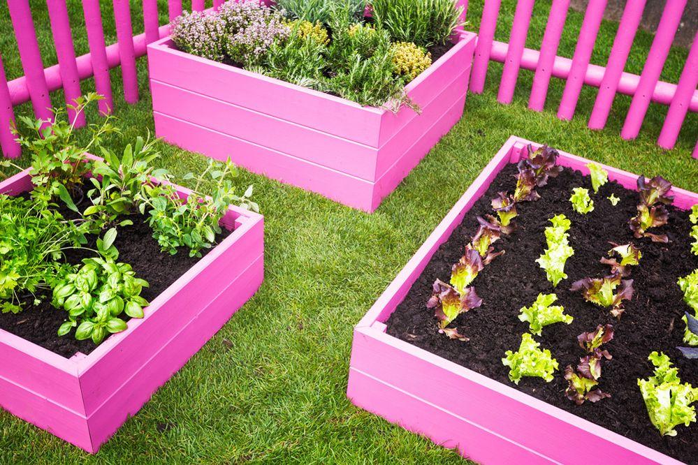 Orto da giardino colorato
