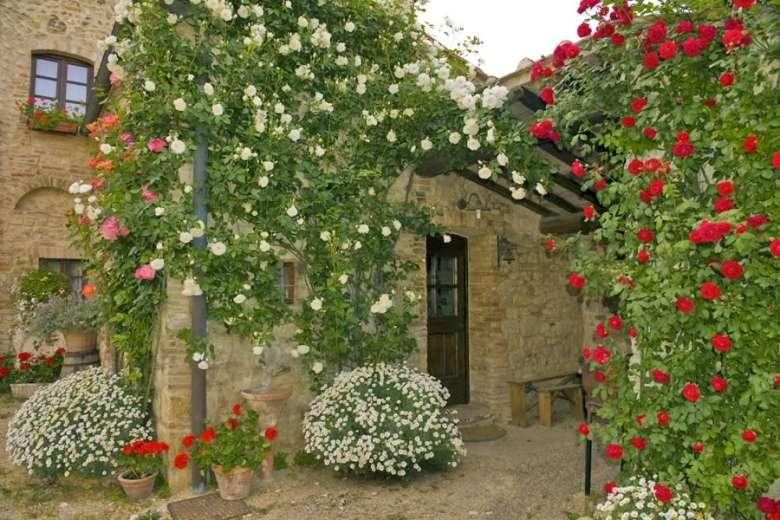 Rose giardino rustico